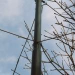 mast 3